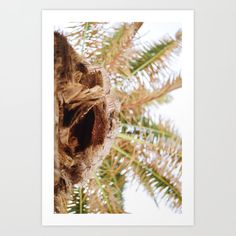 Palm tree from below Art Print by carriena From The Ground Up, Buy Frames, Palm Trees, Printing Process, Angles, Gallery Wall, Art Prints, Photography, Palm Plants
