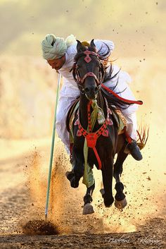 Marwari Horses, Andalusian Horse, Polo Horse, Tent Pegs, Most Beautiful Horses, Culture, People Of The World, Fantasy, Horse Art