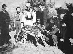 18 photos rares et exceptionnelles des derniers lions et panthères de l'Atlas marocain