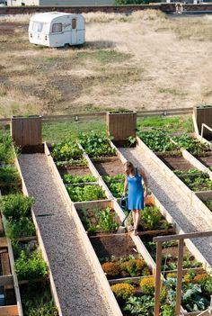 Canopy - Proefproject rooffood gaston gent Diy Garden Bed, Veg Garden, Vegetable Garden Design, Home And Garden, Vegetable Gardening, Small Backyard Gardens, Farm Gardens, Backyard Renovations, Urban Farming