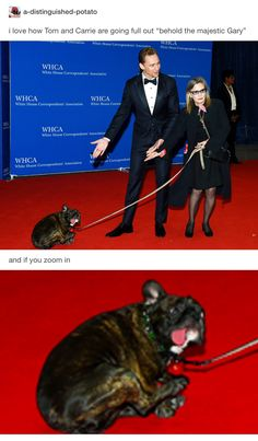 Tom Hiddleston and Carrie Fisher with the majestic dog Gary.