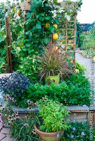 Vegetable Trellis Ideas for Vertical Vegetable Gardening - lots of great pictures and ideas here