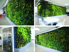 Large Living Wall Installation In Los Angeles