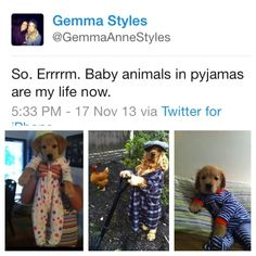 She introduced us to baby animals in pajamas. 21 Reasons Gemma Styles Is The British Best Friend We Never Knew We Had Gemma Styles, Harry Styles, Sheffield Hallam University, 1d Concert, Family Boards, Funny Pins, Funny Stuff, Shes Amazing, Good Good Father