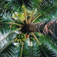 .. #heaven #love #nature #palm #amazing #green #tumblr #tree #followback #F4F #random