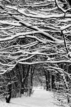 Find images and videos about white, nature and winter on We Heart It - the app to get lost in what you love. Winter Szenen, I Love Winter, Winter Magic, Winter Trees, Winter White, Winter Christmas, Snowy Trees, Deep Winter, Tree Tunnel
