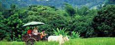 السياحة في تايلاند Thai Travel, Chiang Mai, Travelling, Tourism, Life, Turismo, Travel, Traveling