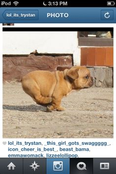 Comment if its a cute chubby dog :~)