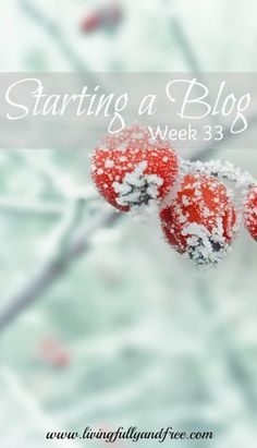 Are you wanting to start a blog, but don't know where to start? Read along as I share the realities of doing just that!
