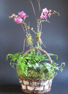 Orchid Baskets Orchid Basket – Plants and Flowers Ltd