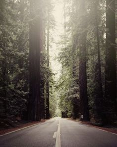 Humbolt Redwoods, CA 02 by LM Chabot - Limited edition prints on The Print Atelier, The Next Generation Art Gallery