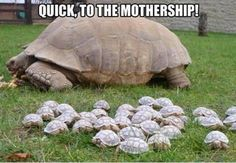 To the mothership!!
