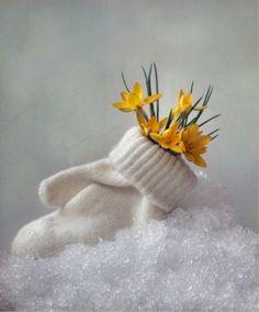 Beautiful Flowers, Beautiful Pictures, Simply Beautiful, Flower Arrangements Simple, Winter Plants, Sunflower Wallpaper, Winter Scenery, Winter Colors, Growing Roses