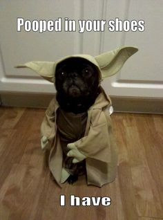 Yoda Pug - love the caption,  costumes on animals are insane to me.