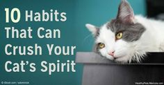 If you value your cat's spirit, you have to avoid these habits as much as possible.