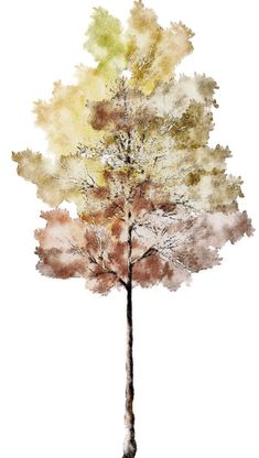 tree watercolor - Buscar con Google