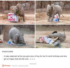 Baby Elephants Photos And Memes That Will Make You Smile Instantly - World's largest collection of cat memes and other animals Cute Little Animals, Cute Funny Animals, Funny Cute, Cute Dogs, Cute Babies, Animals Doing Funny Things, Hilarious, Funny Animal Memes, Funny Animal Pictures