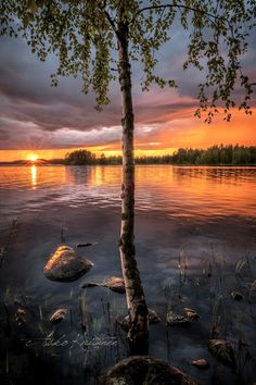 Birch tree in Finland Beautiful Sunset, Beautiful World, Beautiful Places, Beautiful Pictures, Sea Flowers, Good Old Times, Nature Pictures, Places Around The World, Wonders Of The World