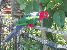 Amazing colours, beautiful bird