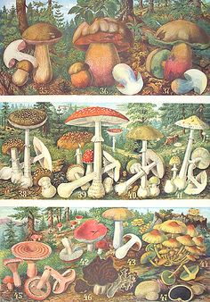 mushrooms and toadstools Mushroom Images, Mushroom Art, Creation Art, Nature Illustration, Fauna, Psychedelic Art, Botanical Prints, Collage Art, Vintage Art