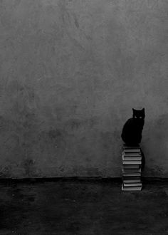 black cat sitting on books