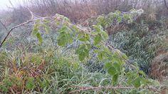 Jaxine Plants, Plant, Planets