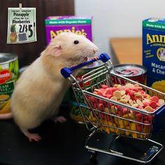 How a rat shops. #martymouse