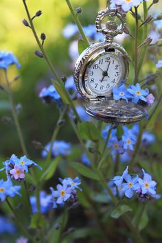 fe05ca75dbfbf 676 Best FORGET ME NOTS images in 2019   Beautiful flowers ...