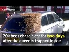 20K Bees Chased a Car for 2 Days to Rescue Their Queen Bee - NationofChange | Progressive Change Through Positive Action