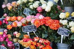 perusing flower markets in france