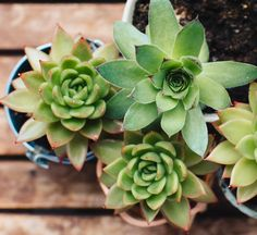 Yellow leaves? Wilting edges? Here's exactly what to do.
