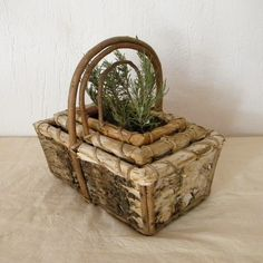 grow herbs in a vintage basket
