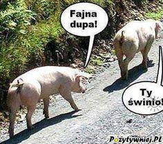 Fajna dupa Weekend Humor, Funny Captions, Going Fishing, Best Memes, I Movie, Haha, Jokes, Animals, Motto