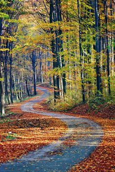 Country Road take me home. Beautiful World, Beautiful Places, Beautiful Forest, Winding Road, Back Road, Autumn Scenes, Take Me Home, Pathways, Belle Photo