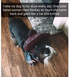 25931 Best Pets Images On Pinterest In 2018 Funny Animals Cutest