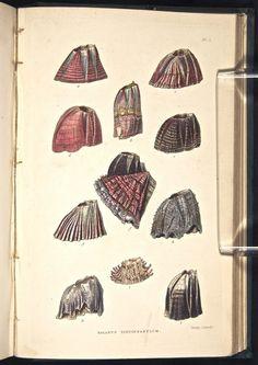Darwin's publications.