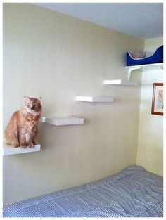 cat shelves about a 50 project including the bed at the top 4
