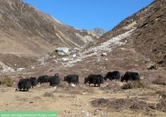 Annapurna Sanctuary, Poon Hill, Jungle Safari and City Tours photo and video gallery. Jungle Safari, Circuit, Trek, Tours, Photo And Video, Gallery, Black, Black People