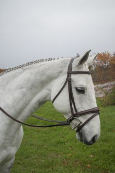 KL Italia Millbrook Bridle  Just like our Wellington Bridle, this has a wide shaped noseband but comes with a flash.