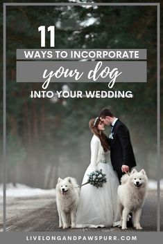 11 unique ideas to incorporate and include your dog into your wedding! Your furry family member deserves to be a part of your special day and we have some tips to make it go smoothly. Dogs in Weddings Wedding Inspirational Including Pets Wedding Planning Tips, Wedding Tips, Bridal Tips, Wedding Outfits, Wedding Trends, Wedding Dresses, Dog Wedding, Dream Wedding, Military Wedding