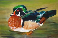 Contemporary Artists of Texas: Wood Duck 8x13 Wildlife Barbara Haviland oils