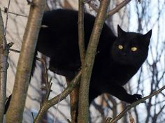 13 Common (But Silly) Superstitions | Friday the 13th Superstitions | Myths, Legend and Tradition | LiveScience