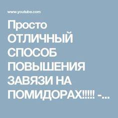 Просто ОТЛИЧНЫЙ СПОСОБ ПОВЫШЕНИЯ ЗАВЯЗИ НА ПОМИДОРАХ!!!!! - YouTube