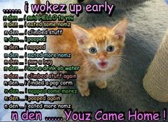 A day in the life of your kitten