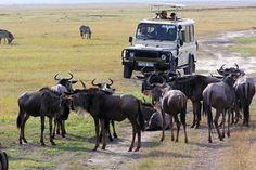 Tanzania Safari Information And Special Sights