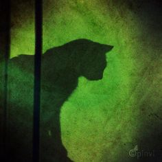 """""""Where there is much light, the shadow is deep"""" J. Crazy Cat Lady, Crazy Cats, Cat Love, Beautiful World, Animal Kingdom, Bright, Deep, Quilts, Garden"""