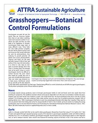Grasshoppers are a big problem, especially to farmers. Learn how to manage them botanically!