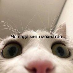 Bad Memes, Funny Video Memes, Life Memes, Stupid Memes, Funny Reaction Pictures, Hello Memes, Russian Memes, Cute Love Memes, Wtf Funny