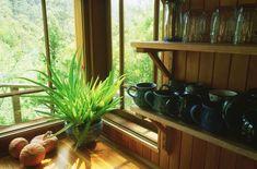Лучшие комнатные растения для солнечных окон. Фото: Rob Blakers/Getty Images