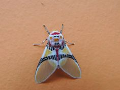 wings of a moth